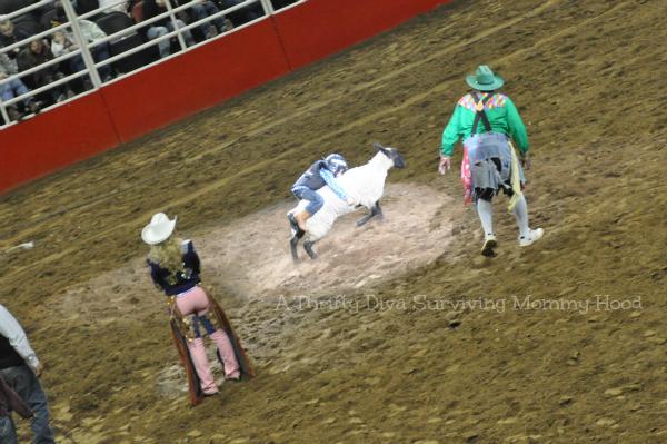 San Antonio Rodeo 2013 Brody Mutton Bustin