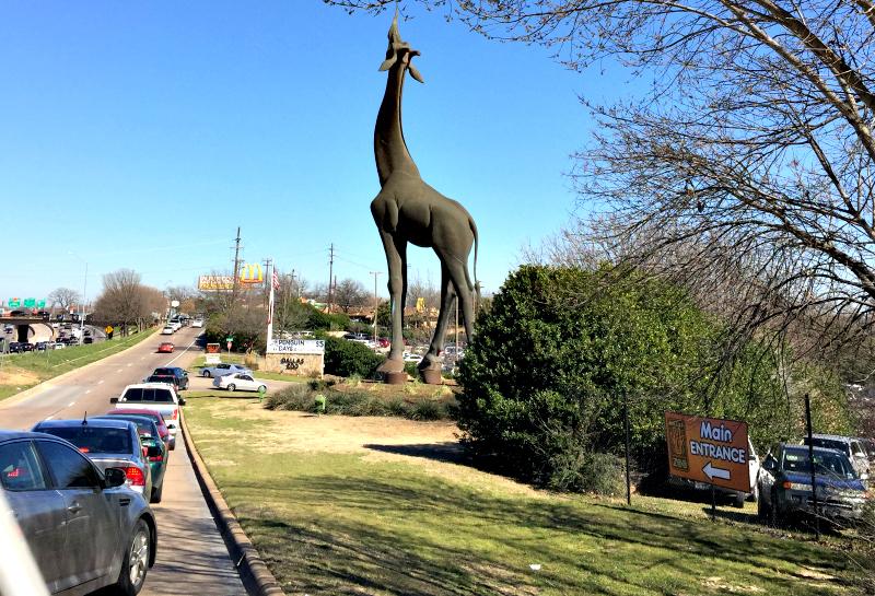 giraffe dallas zoo statue