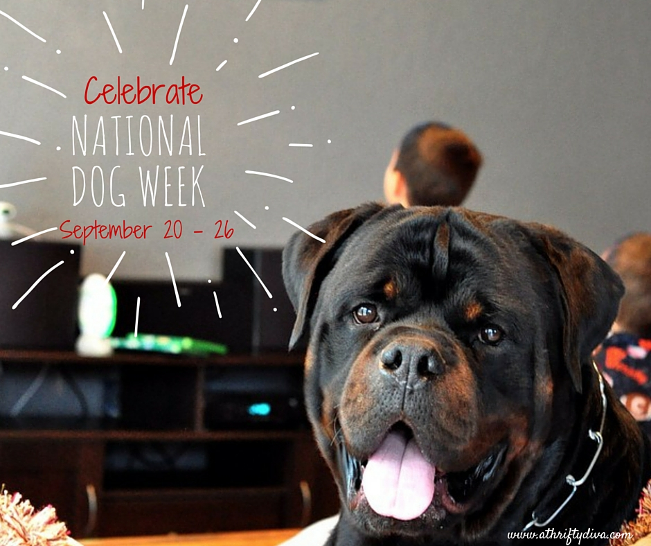 National Dog Week #FriendsWithBeneful 