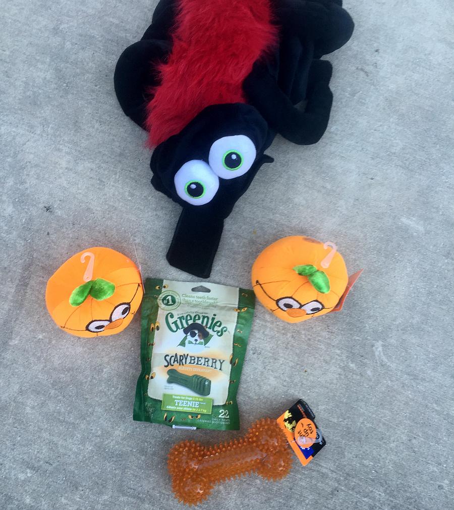 halloween at petsmart