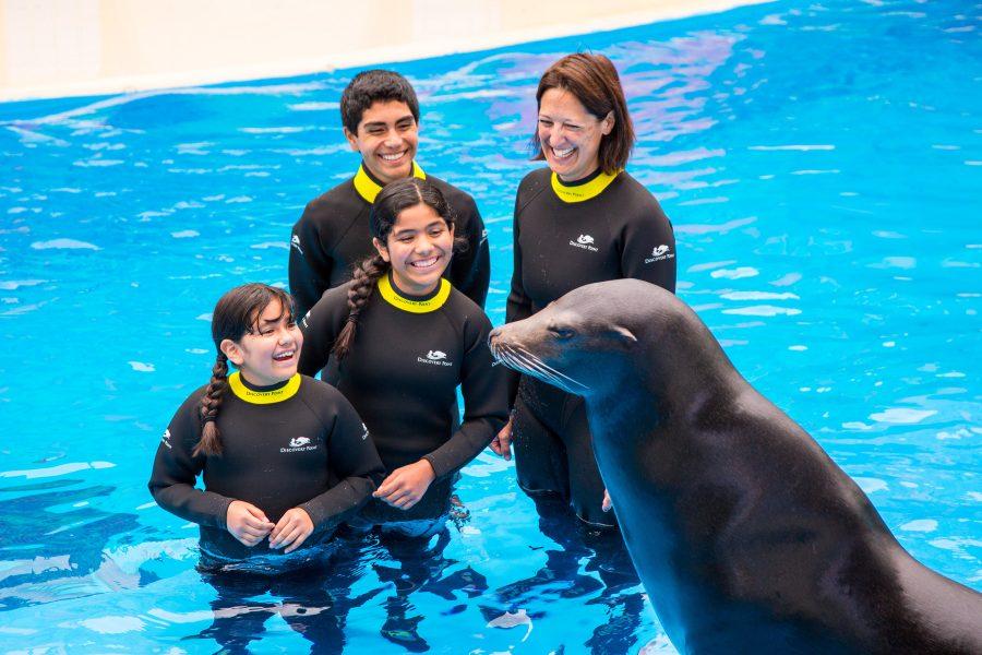 Sea Lion Interaction SeaWorld San Antonio Dolphin Encounters
