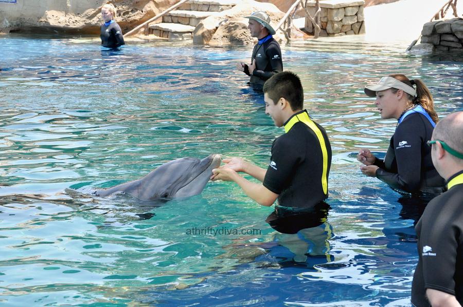 SeaWorld San Antonio Dolphin Encounters