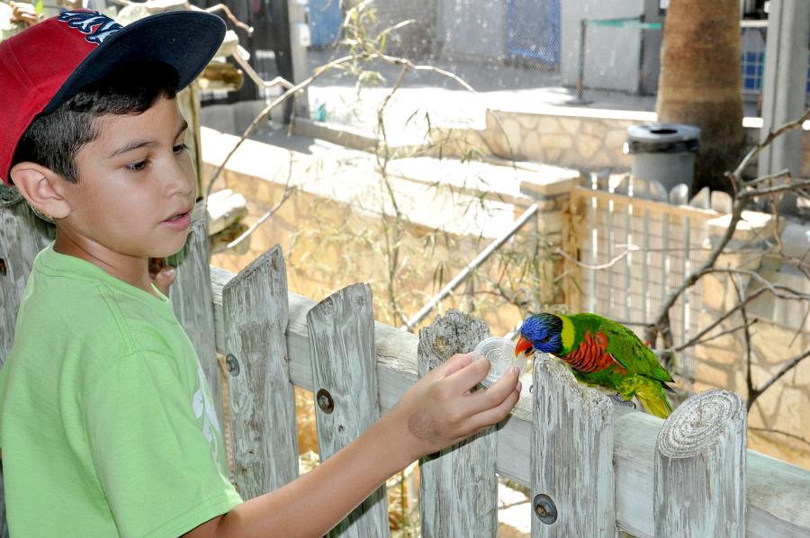 Lory Landing at san antonio zoo camp