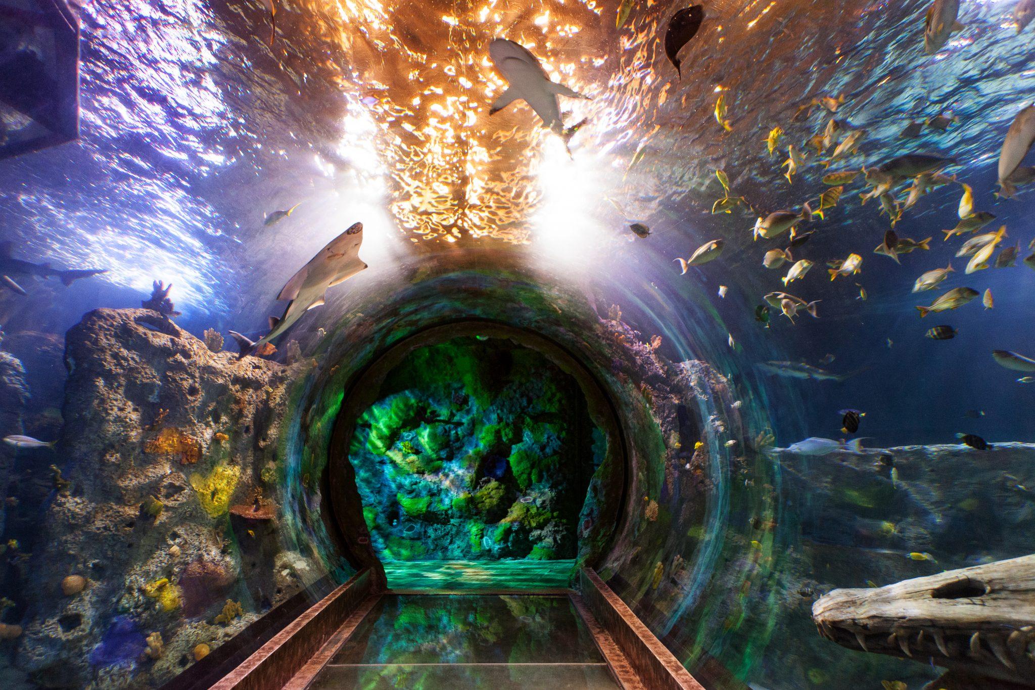 Sea Life Aquarium, Grapevine, Texas