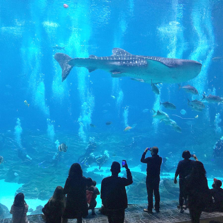 Georgia Aquarium Things To Do In Atlanta Georgia