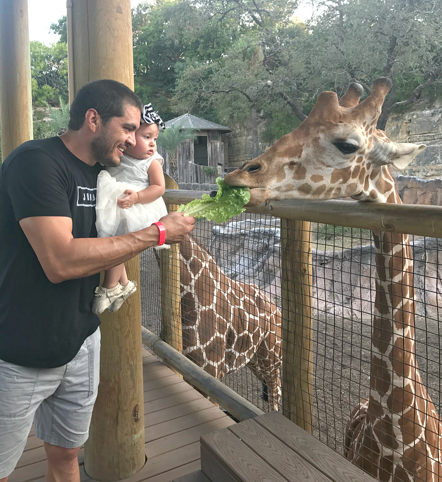 Meeting the giraffes at the San Antonio Zoo