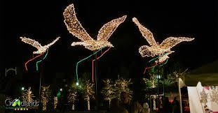 Lighting of the doves festival lights