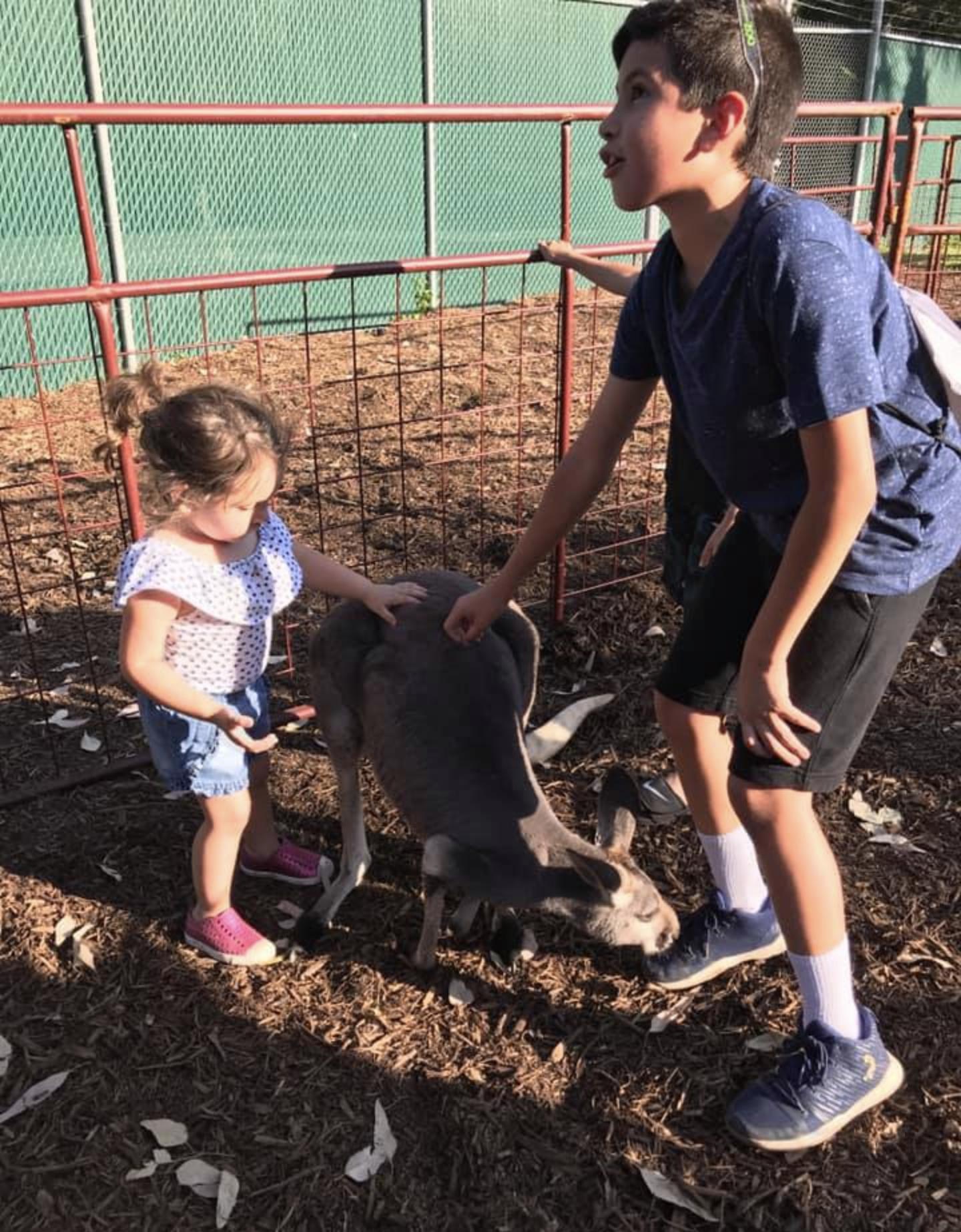 Kangaroos at the San Antonio Zoo